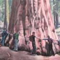Big tree (2011)